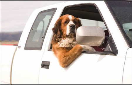 dogcar1